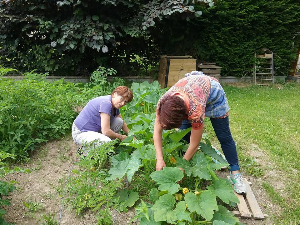 Jardine et cultive avec l'AMAP